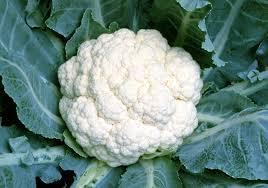 白色野菜カリフラワー