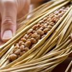 【美肌にも最適】発酵食品の効果と摂り方は?