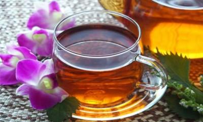 紅茶きのことコンブチャ
