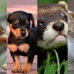 ペットや動物からわかる地震の前兆