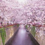 【新入社員必見】お花見の場所取り方法