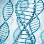【遺伝子検査でダイエット】効果や費用 方法まで
